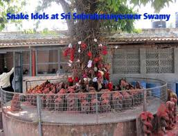 Tree in Mopidevi temple